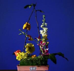 Fruits, fleurs, mousses peuvent composer l'ikebana traditionnel