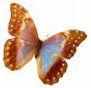 le papillon symbole d'amour
