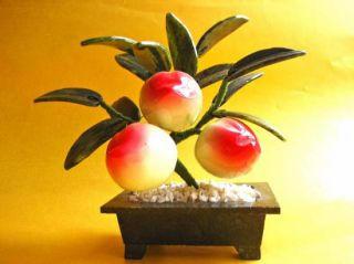 Arbre feng shui pour attirer la longévité et la santé dans la maison